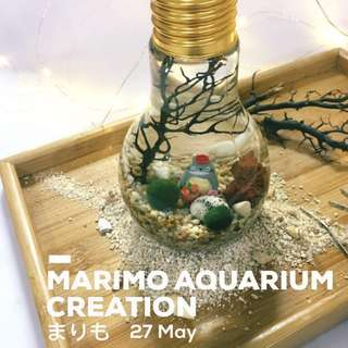 😍MARIMO まりも AQUARIUM WORKSHOP (27 May @ ARTBOX2018. Limited Slots! Sign up now!)🌿