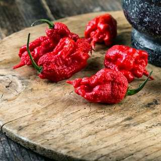 Gardening ♡ Carolina Reaper Pepper Plant Seeds X 25