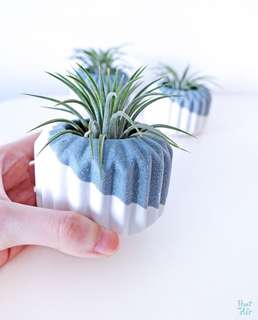 Mix: Double planter with air plant ( restocks !)