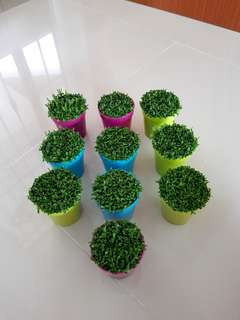 Happy Plant for office & gifts!(reserved)