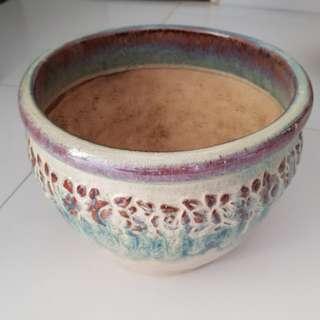 Nice Plant/ Flower pot