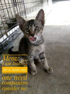 Kitten need a home. Now in my shelter at SS 15 Subang Jaya Please Call Christopher at HP 011 3339 0582.