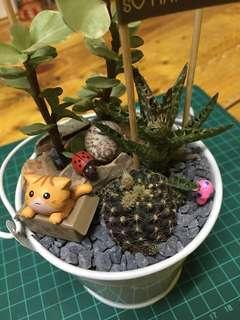 Birthday Gift : Cactus/Succulent in Medium Bucket