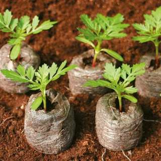Jiffy Peatmoss Seeds Starter 41mm - 12 pcs