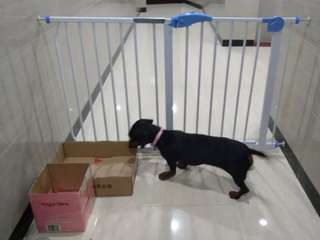 BNIB Pets /Baby Safety Gate / Door / Grill / Barrier