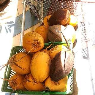 FREE Coconut Husk