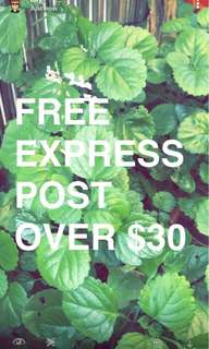Free express post over $30