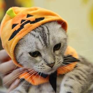 猫日屋 萬聖節南瓜小怪獸寵物披風頭套