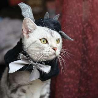 猫日屋 萬聖節小蝙蝠披風頭套