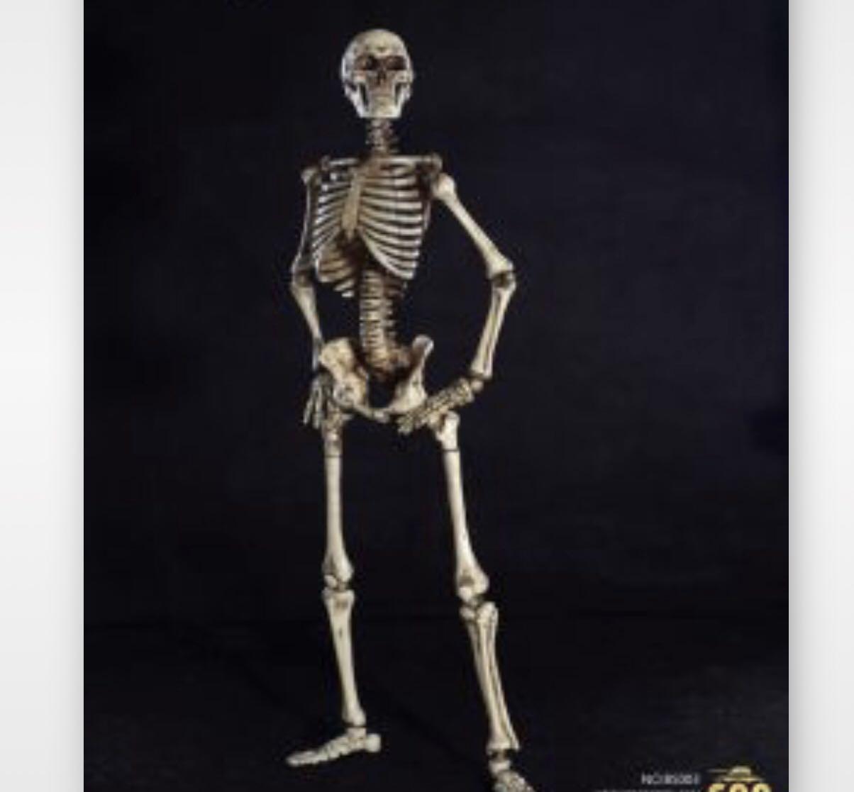 Skeleton Games Anatomy Choice Image - human body anatomy