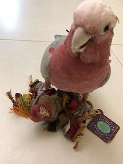 Parrot and bird hanging toys