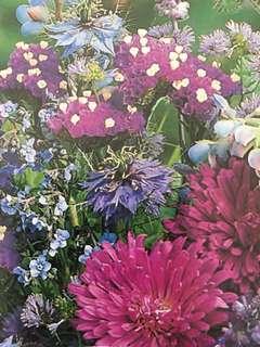 Splash of Blue Mixed Annuals Flower Seeds
