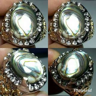 Natural Fosil Kerang Laut Hot Crystal
