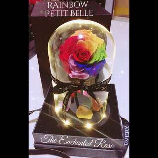 Rainbow Enchanted Rose in Glass dome. Beautiful Bell Jar with illuminating lights