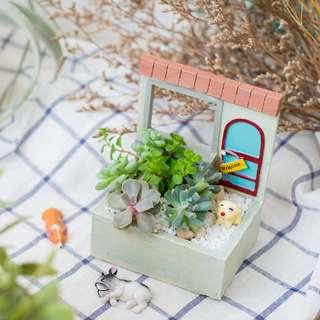 Succulent Arrangements - Welcome Home