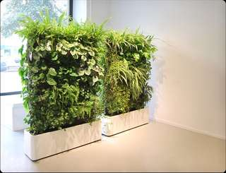 Supply and install green wall