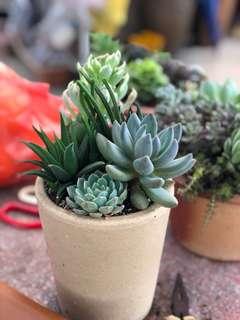 Succulents bouquet in terracotta pot