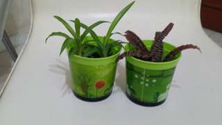 Mini potted plants.