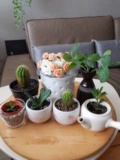 Mother's Day Plants Gifts