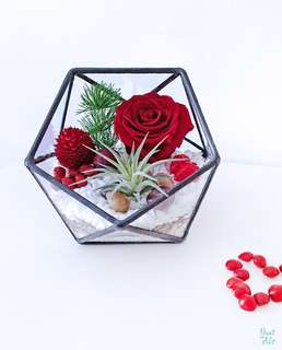 Aerium: Amore Alley with red preserved rose and air plant