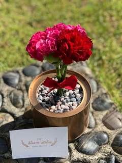 Carnations Pot