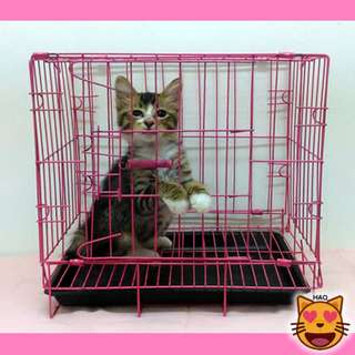 SANGKAR KUCING MURAH HARGA PATUT - CAT PET CAGE CHEAP LOW BUDGET (WITH TRAY)