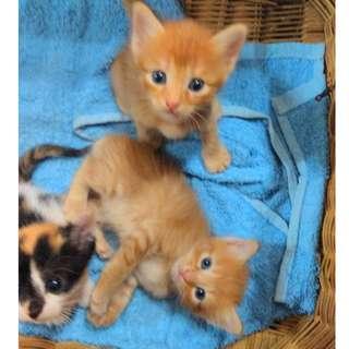 7 KITTIES TO ADOPT FREELY