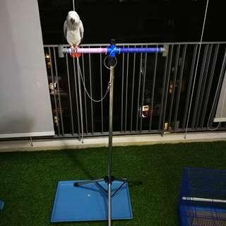 Stainless steel bird stand