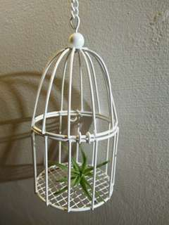 Hanging air plant in cage