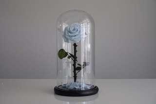Premium Preserved Ecuadorian Roses in Glass Dome