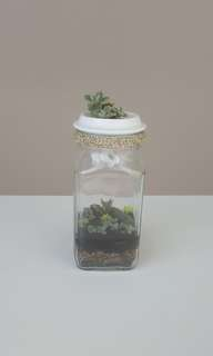 'Zen+Contemporary/Open+Close' Terrarium