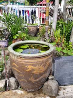 Antique dragon pot with waterlilies each