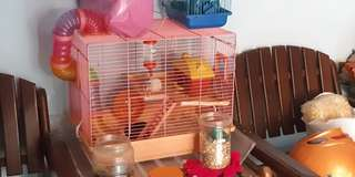 Kandang hamster & 4 hamster