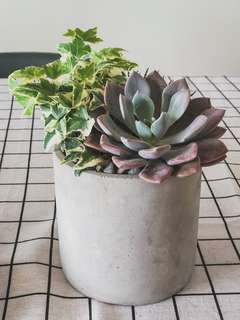 Succulent Gifts for Mother's Day