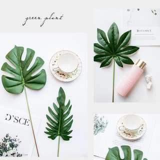 Tropical Leaf Photo Prop