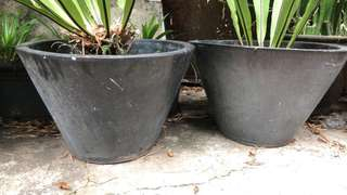 2 big terracotta pots ($25 each), top inner diameter is 60 cm.