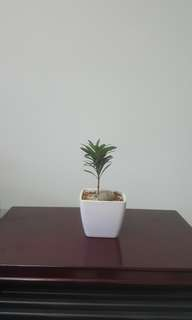 Baby Little Plant