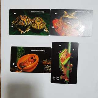 MRT Cards - Frogs