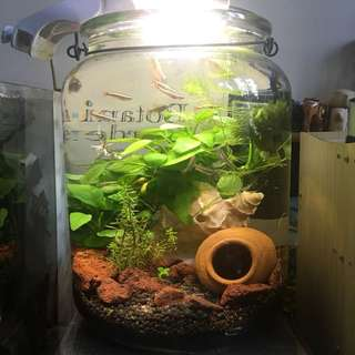 Complete Fish Tank + etc ( discounted )