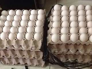 Sale! Fresh Eggs!