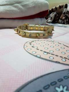 Gold studded collar for cat/ dog
