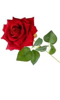 全新 永生花 玫瑰 真愛 仿真花 母親節 女朋友 情人節 一生一世 愛的宣言 Rose (not real flower) valentine love