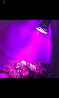 Indoor Gardening LED Grow Light