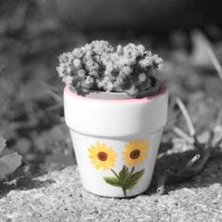 迷你向日葵花盆