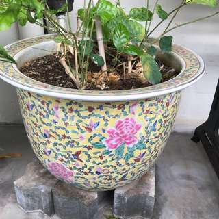 Chinese Flowering Pot