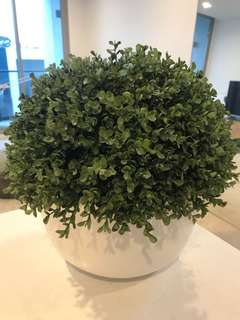 Fake pot plant / fern