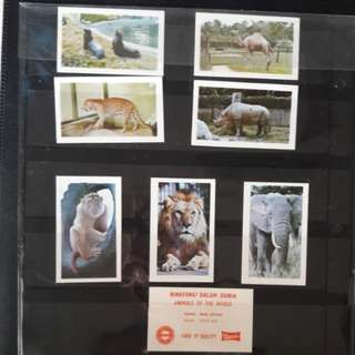 Animals at the world