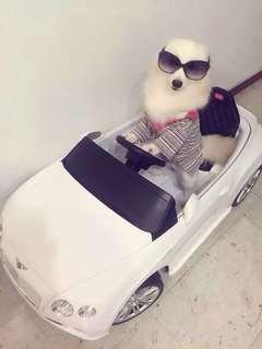 Dog Boarding In Home