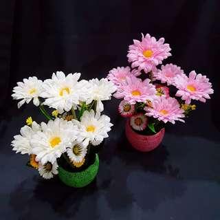 Daisy Flowers Clay pot