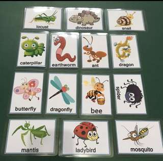 Flash cards x 14 - laminated, insects